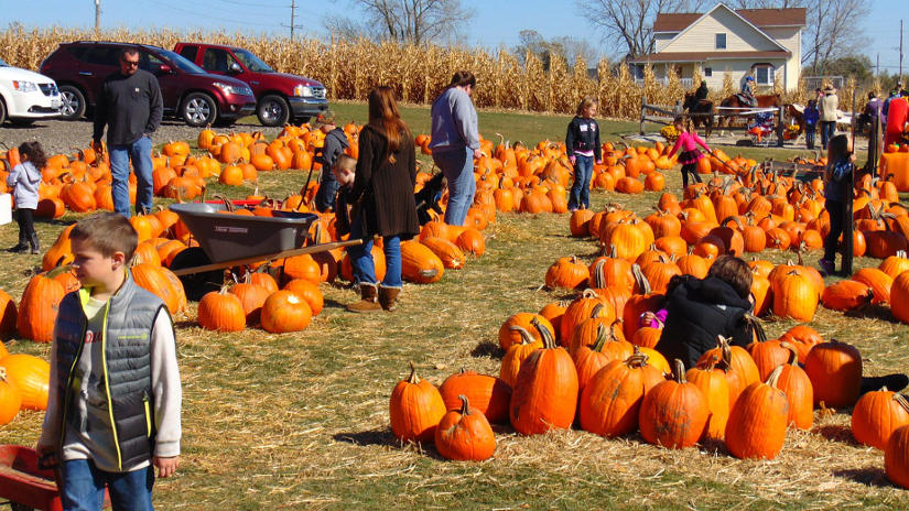 choosing a pumpkin at patch