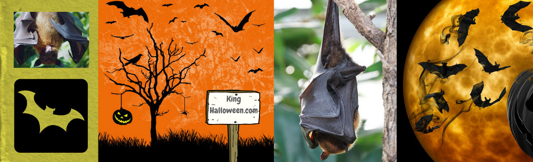 Halloween symbols flying bats