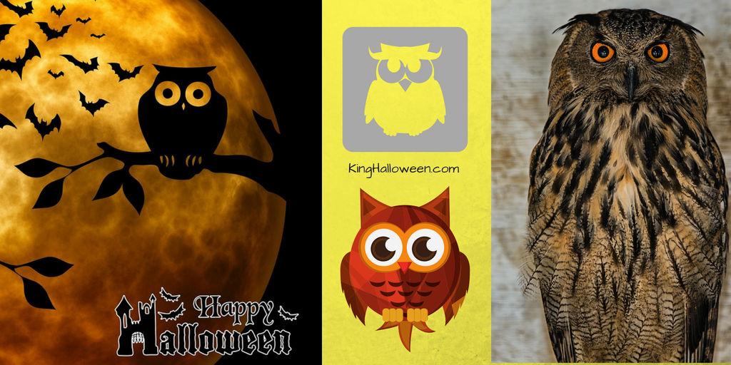 Owl Symbolism Images