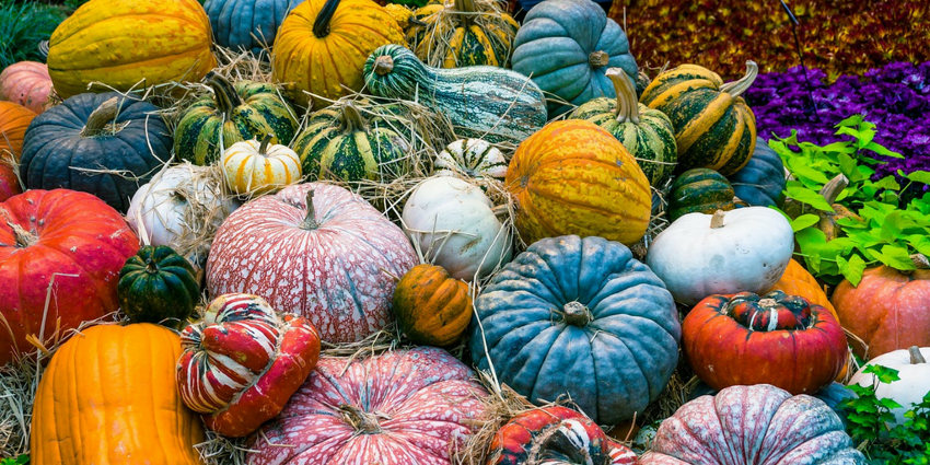 pumpkin facts - colors and types
